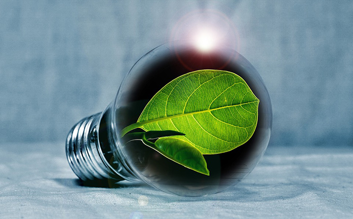 A light bulb with a leaf inside it instead of a coil