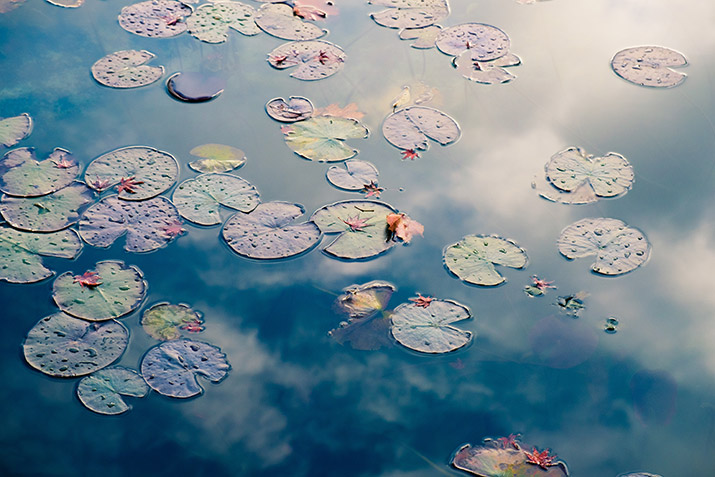 Lilly pads floating on water's surface with reflection of clouds in the water