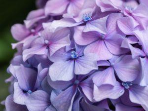 gardening applications for alum